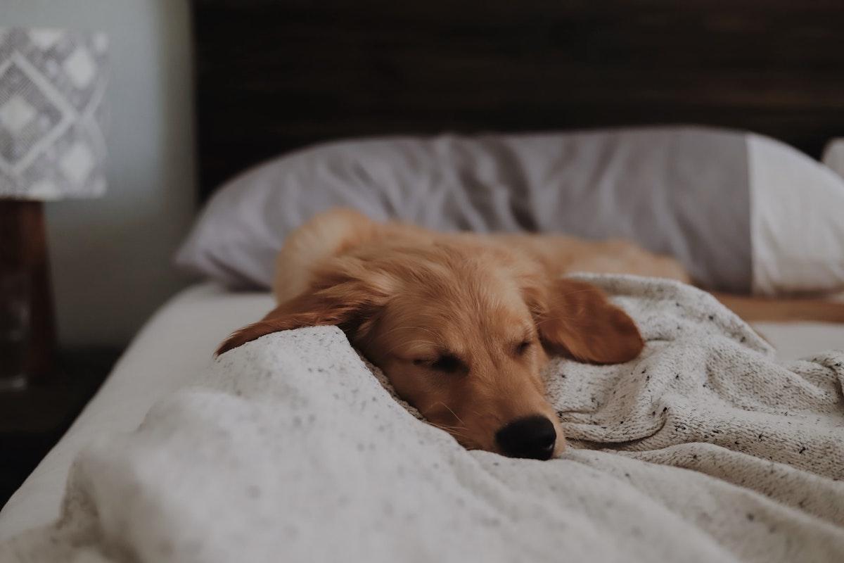自然界の動物たちも昼寝が大好き