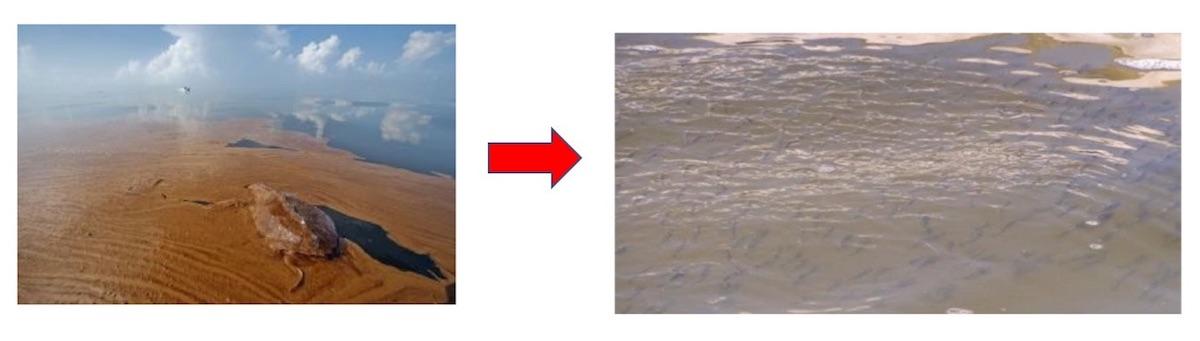 4ヶ月で汚染海域を浄化することに成功