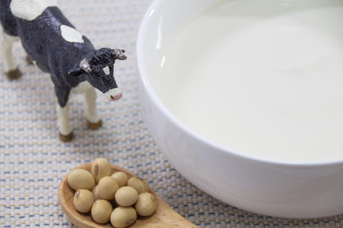 豆乳ヨーグルトはお腹も喜ぶ発酵食