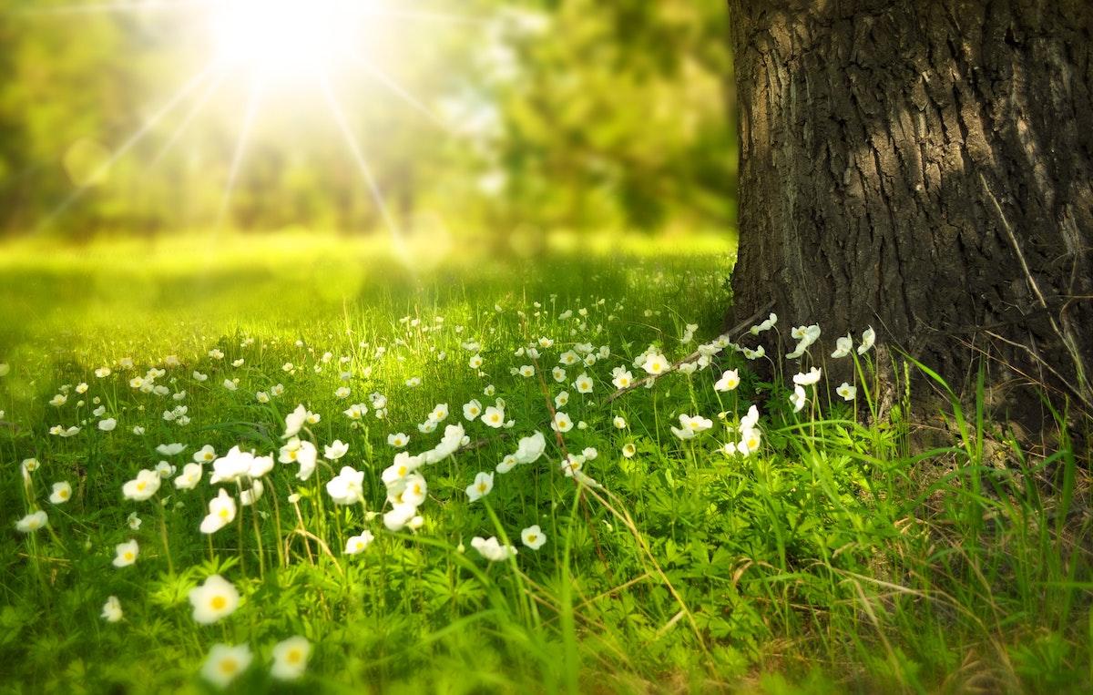 五感を自然の感覚に戻すためには