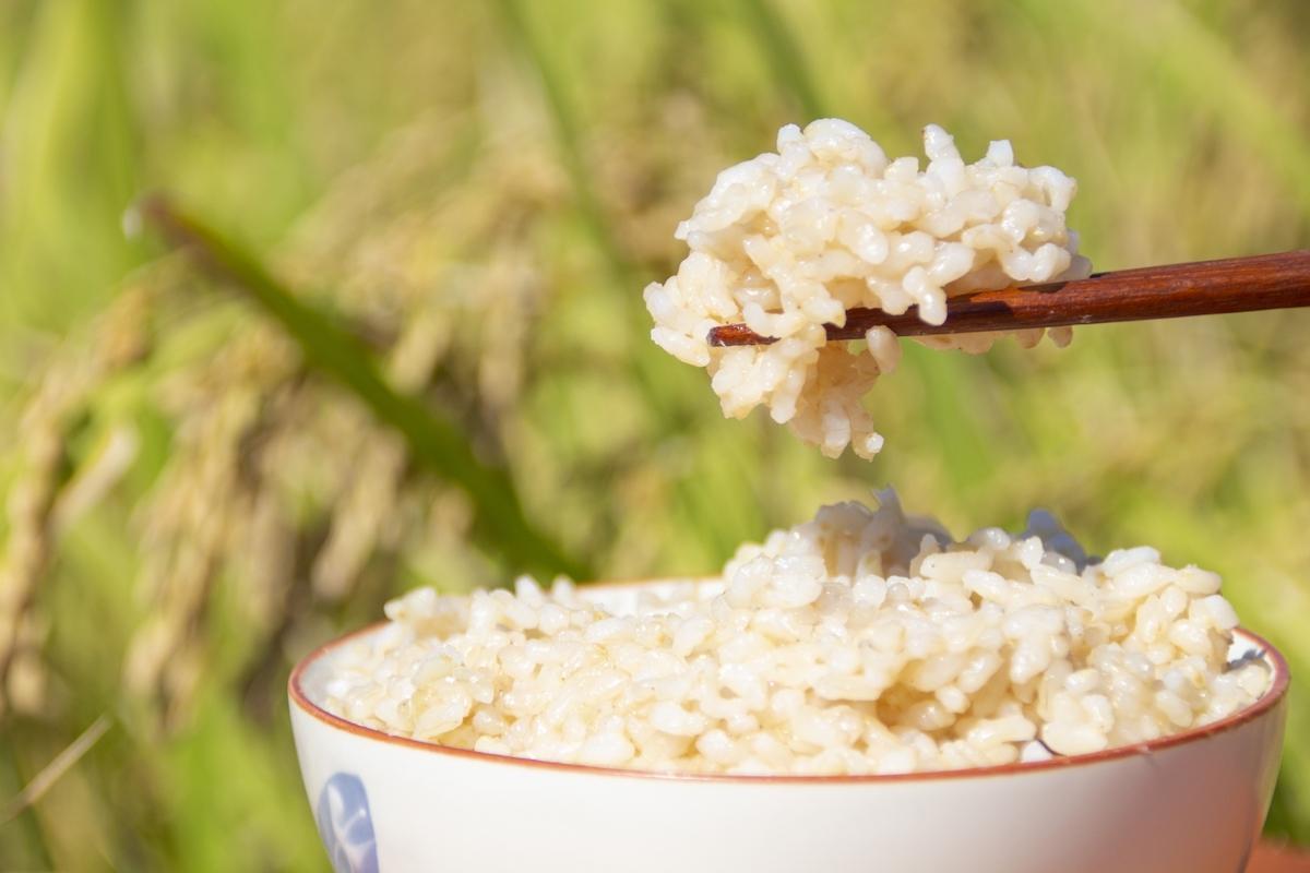 【玄米が発芽しない理由3つ】発芽率の高い生きているお米を選ぼう