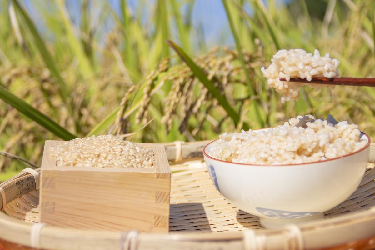 玄米を食べると胃もたれする人へ【消化によく美味しい玄米の食べ方】