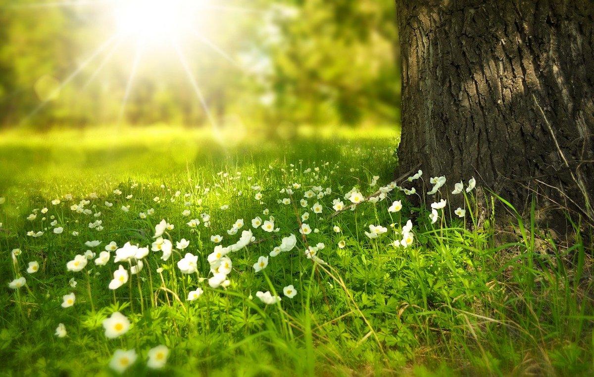 【自然療法クリニック光のいずみ】石川眞樹夫先生のセミナーに参加